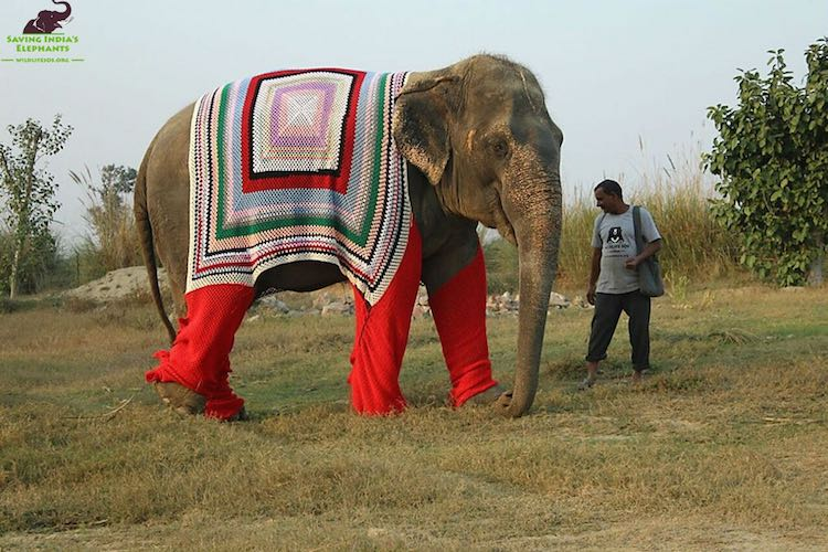 elephant-sweater-wildlife-sos